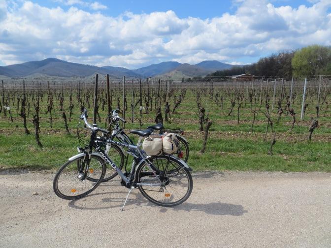 Bikes and vineyards