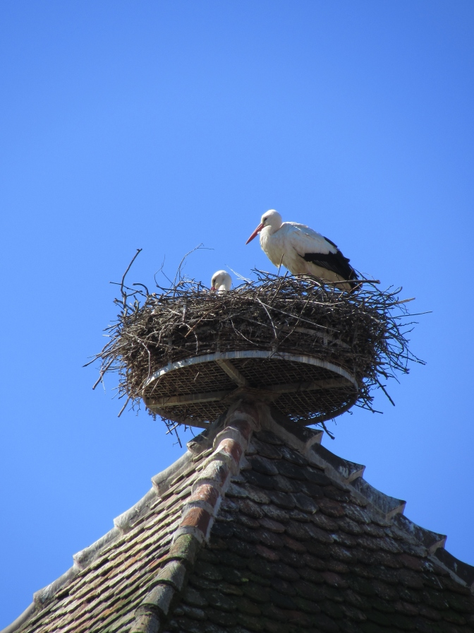 Stork perched on a house